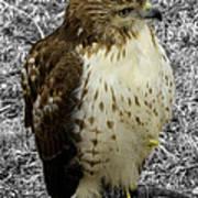 Hawk V3c Art Print