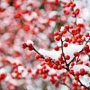 Hawthorn Berries Art Print