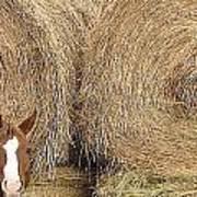 Hay Horse Art Print