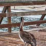 hd 392 hdr - Pelican On The Pier Art Print