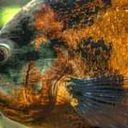 Hdr - Fish Art Print