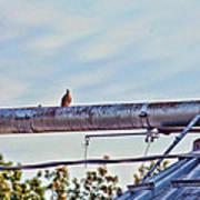 Hdr Bird On A Pipeline II Art Print