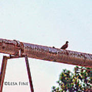 Hdr Dove On A Pipe Art Print