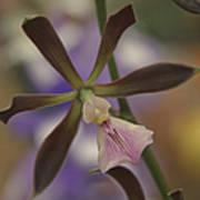 He Pua Ke Aloha - The Flower Of Love - Orchidea Tropicale Art Print