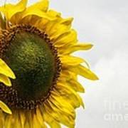 Head Up To The Rains - Sunflower Art Print