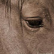 Heart Of A Horse Art Print