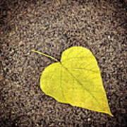 Heart Shaped Leaf On Pavement Art Print