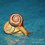 Heart Snails Art Print