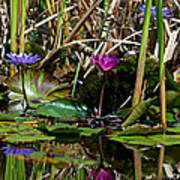 Heat Of The Afternoon - Down At The Lily Pond Iv Art Print