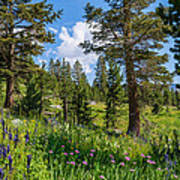 Heaven In The High Country Art Print