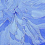 Heavenly Blue Dahlia Art Print