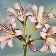 Heavenly Lilies Art Print