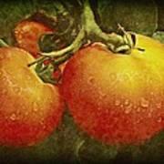 Heirloom Tomatoes On The Vine Art Print