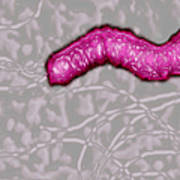Helicobacter Pylori Art Print