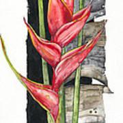 Heliconia 01 Elena Yakubovich Art Print