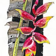 Heliconia 03 Elena Yakubovich Art Print