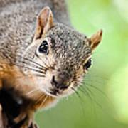 Hello Squirrel Art Print