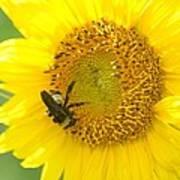Hello Sunflower Art Print