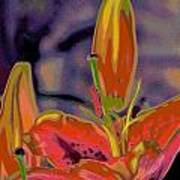 Hemerocallis  Art Print