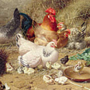 Hens Roosting With Their Chickens Art Print