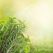 Herbs With Copyspace Art Print