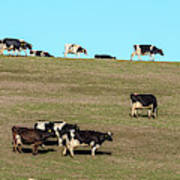 Herd Of Cows Grazing On A Hill, Point Art Print