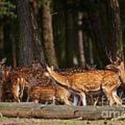 Herd Of Deer In A Dark Forest Art Print