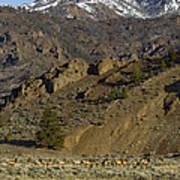 Herd Of Elk   #7740 Art Print