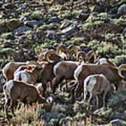 Herd Of Horns Art Print