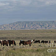 Herd Of Wild Horses Art Print by Juli Scalzi