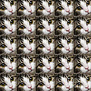 Here Kitty Kitty Close Up 25 Art Print