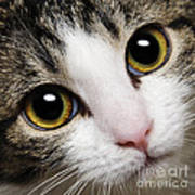 Here Kitty Kitty Close Up Art Print by Andee Design