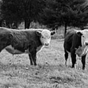 Hereford Portrait V In Black And White Art Print by Suzanne Gaff