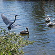 Heron And Pelicans Art Print
