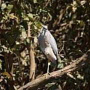 Heron At Katherine Gorge Art Print