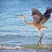 Heron Boca Grande Florida Print by Fizzy Image