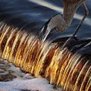 Heron Fishing At The Weir Art Print