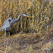 Heron In The Grass Art Print