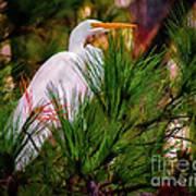 Heron In The Pines Art Print