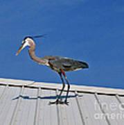 Heron On Rooftop Art Print