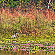 Heron On Shore Of Rapti River In Chitwan Np-nepal  Art Print