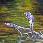 Heron Watching Art Print