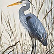 Herons Natural World Art Print