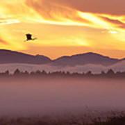 Heron's Sunrise Art Print