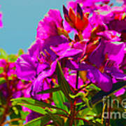 Hervey Bay Flowers Art Print