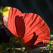 Hibiscus 10 Art Print
