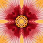 Hibiscus Close-up--kaleidoscope Art Print