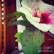 Hibiscus Flower In Bloom Art Print