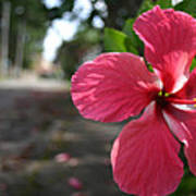 Hibiscus Art Print by Frederico Borges
