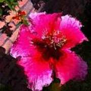 Hibiscus In The Sun Art Print